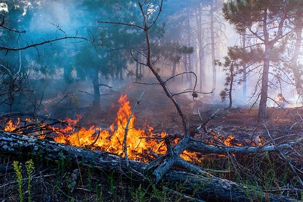 Outdoor Burning in Georgia.
